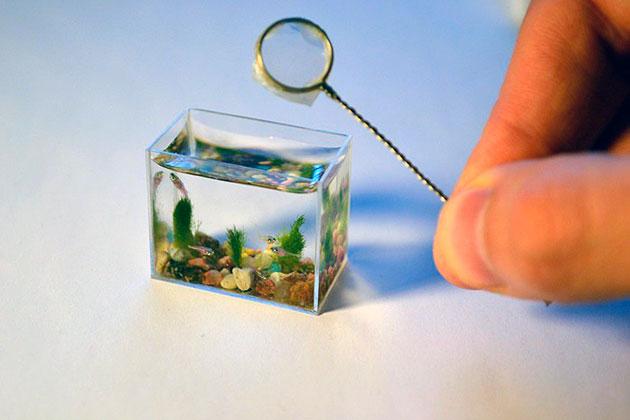 Новичкам в аквариумистике рекомендуется приобретать аквариумы небольших объемов