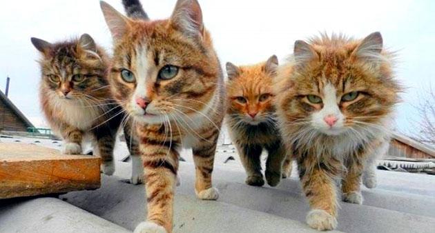Содержание кошки в городе