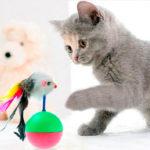 Сколько стоит содержание кошки