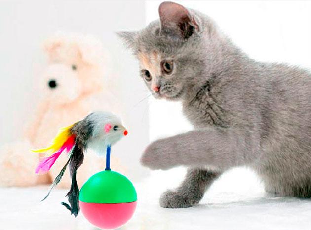 На сегодняшний день в магазинах есть огромное количество игрушек для кошек, совершенно различной ценовой категории