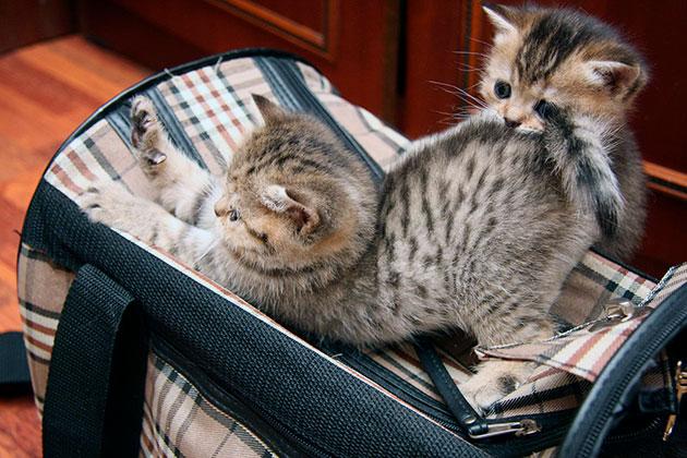 Цена переноски для кошки сильно отличается в зависимости от материала изготовления