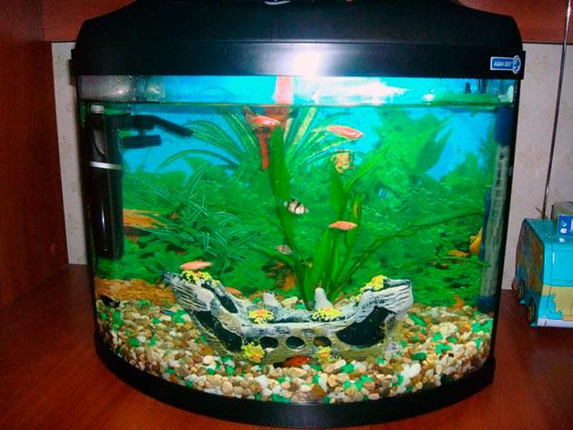 При заселение рыб различных видов, обязательно учитывайте их поведение и агрессивность