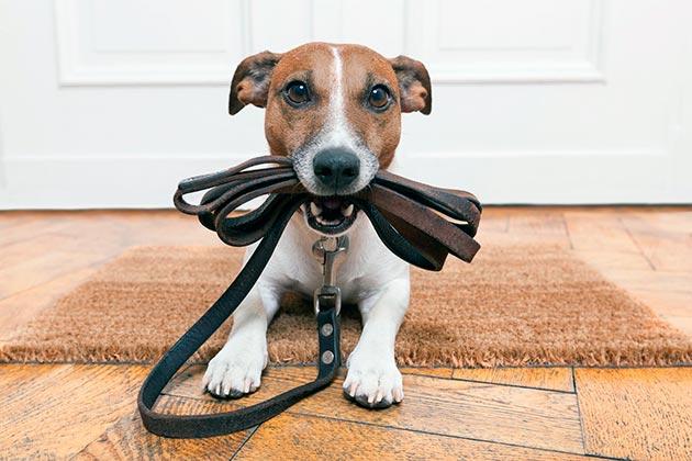 Выгул щенка без прививки