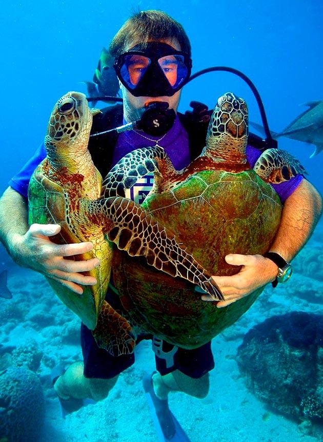 Ранее зеленную черепаху массово уничтожали, но теперь она занесена в красную книгу и люди пытаются спасти популяцию