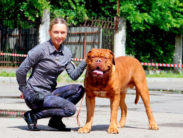 Бордоский дог — спокойная и рассудительная собака с уравновешенной психикой