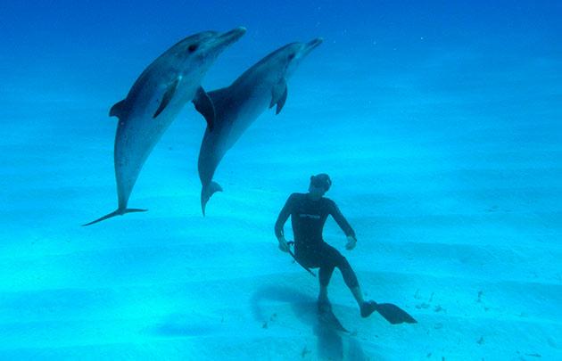 На сегодняшний день основной морской лабораторией по изучению взаимодействия человека и дельфина, является Моутская лаборатория