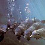 Почему акулы боятся дельфинов – факты и мифы