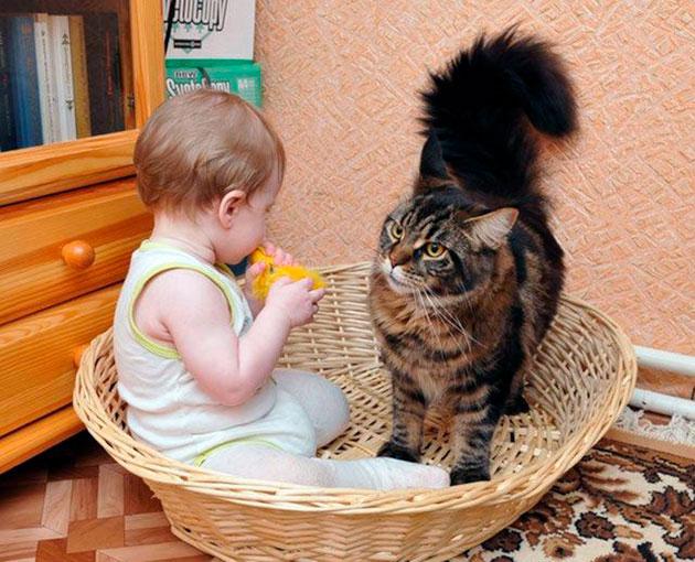 Зачастую игры провоцируют агрессию со стороны кошки, когда она не в духе