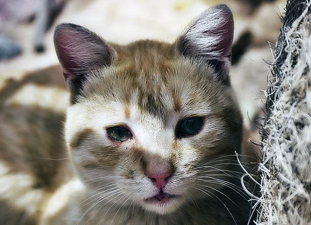 Если рвота содержит еду, в первую очередь стоит пересмотреть рацион питания у кошки