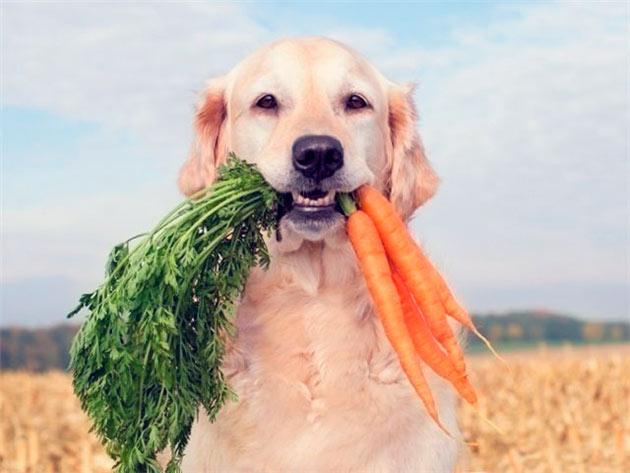Лучшим методом профилактики диабета у собаки, является соблюдение здорового образа жизни
