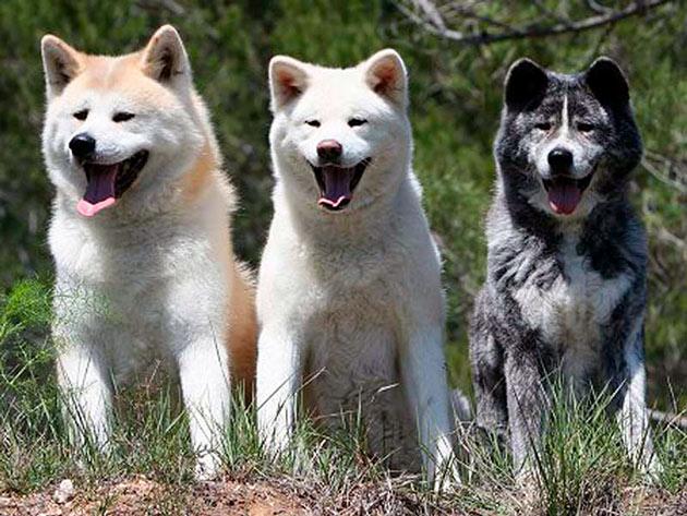 При покупке собаки необходимо учитывать, наличие детей в семье, а так же для каких целей приобретается собака