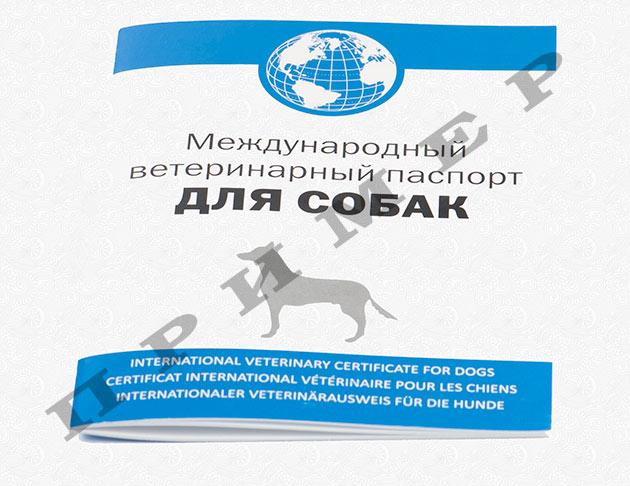 Ветеринарный паспорт для собак