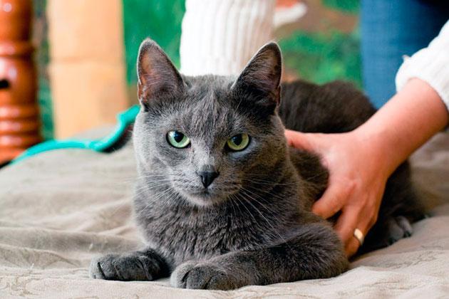 Если не кастрировать кота, возможно по мере взросления ваш любимец станет агрессивным