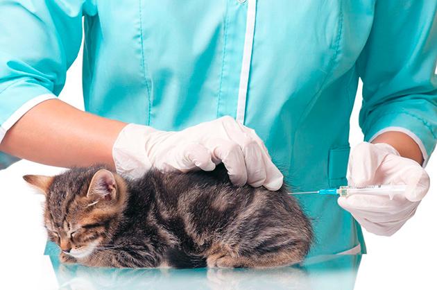 Как правильно делать уколы кошке