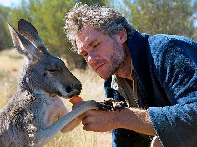 Многие думают, что кенгуру дружественны по отношению к человеку, но это не всегда бывает так