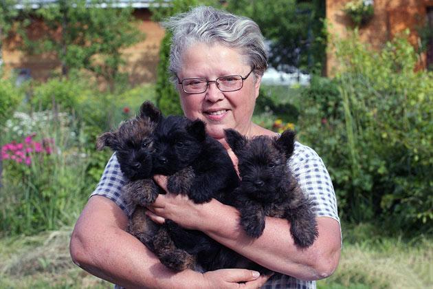 Владельцы отзываются о керн-терьерах, как о миролюбивых, активных и веселых собачках