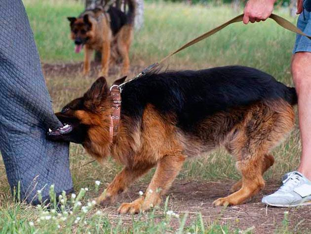 Основным методом профилактики агрессии собаки является правильная дрессировка и никакой агрессии в сторону питомца