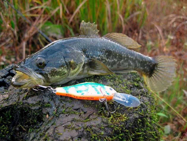 Сейчас ведется работа по снижение популяции, так как рыба ротан может нанести колоссальный ущерб водоему где находится