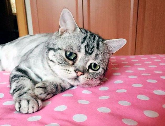 В каком возрасте кастрировать кота