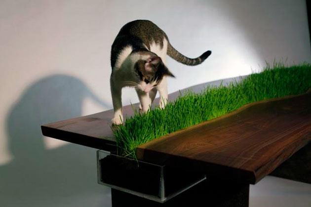 Емкость с семенами должна быть наполовину заполнена, так как по мере прорастания почва будет подниматься