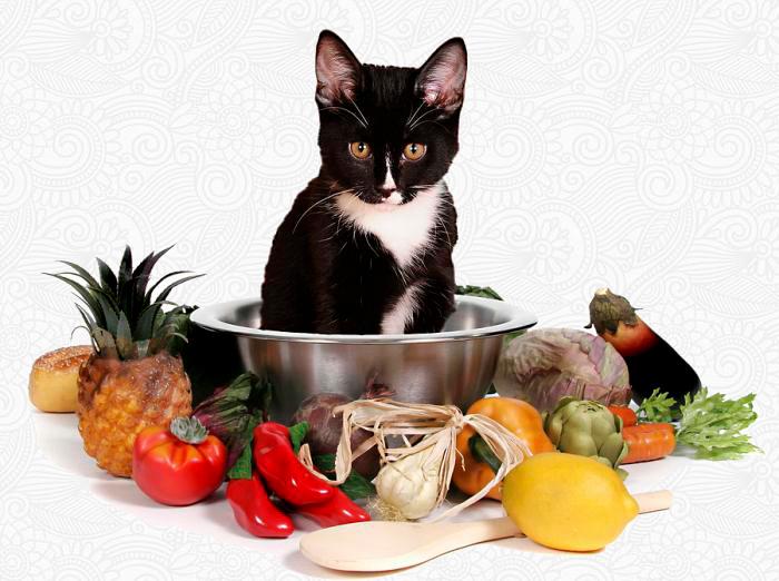Если вы выбрали натуральную пищу для кормящей кошки, то там должны присутствовать все необходимые микроэлементы и витамины