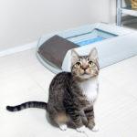 Почему кошка не ходит в лоток