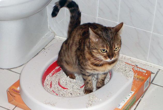 В период полового созревания кот может метить территорию