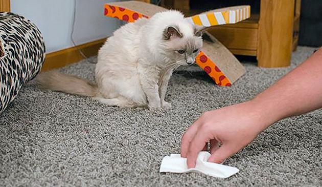 На сегодняшний день существует множество средств по удалению запаха кошачий мочи