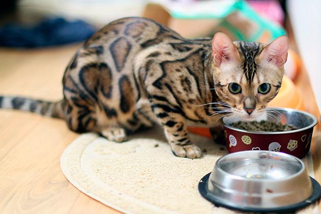 В рационе кормящей мамы кошки обязательно должны присутствовать продукты с кальцием и белком