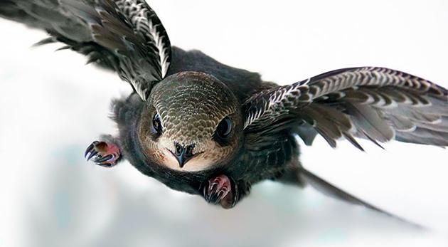 Птица стриж