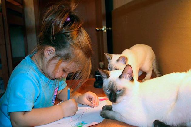 Сиамские кошки очень хорошо относятся к детям и с удовольствием проводят с ними время