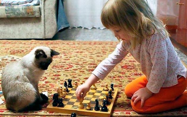 Сиамские кошки обладают незаурядной памятью и хорошим интеллектом