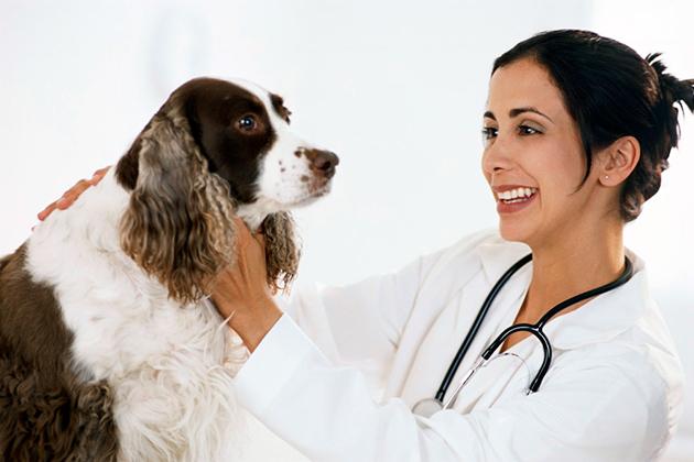 Диагностику и лечение эпилепсии у собаки нужно отдать профессионалам из ветклиники