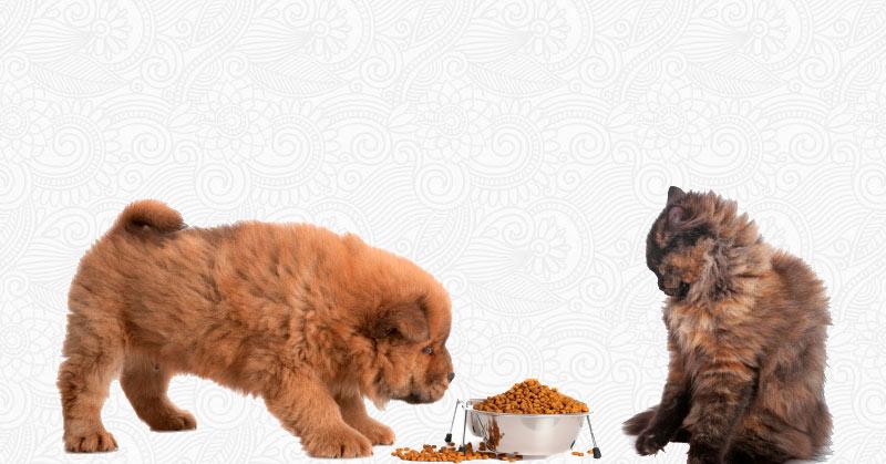 Из-за разницы пищеварительной системы набор витаминов и микроэлементов будет разница в собачьей и кошачьей еде