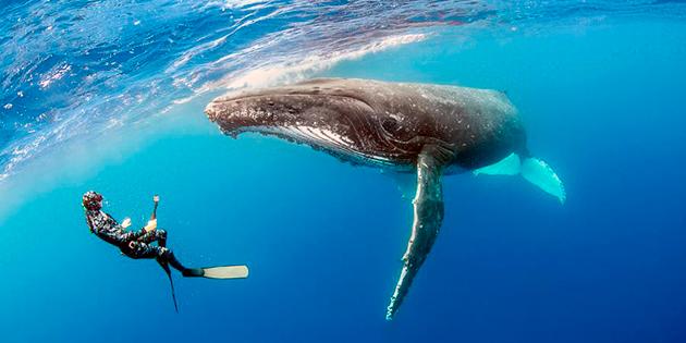 К сожалению, издревле, люди представляли самую большую угрозу для китов
