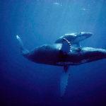 Киты – морские чудовища