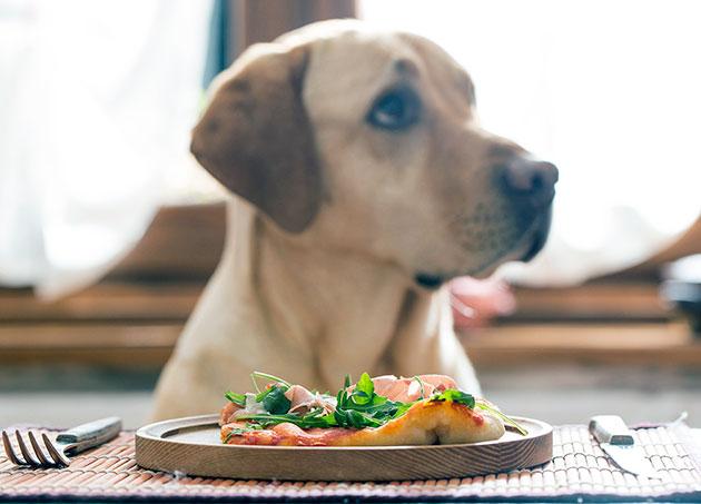 Ветеринары хорошо относятся к корму Summit Holistic и особенно положительно корм влияет на собак склонной к полноте