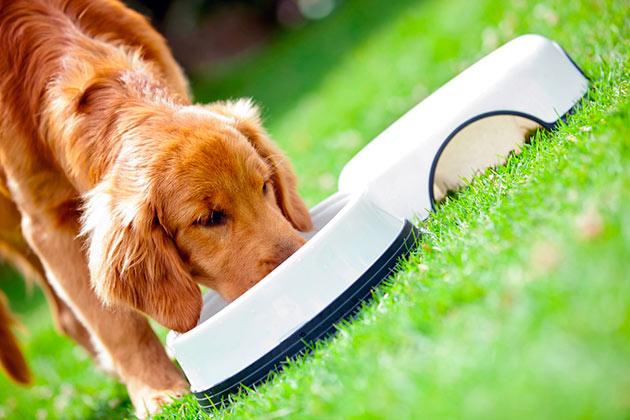 Ветеринары спокойно относятся к кормам Педегри, ведь в них не используются вредные вещества