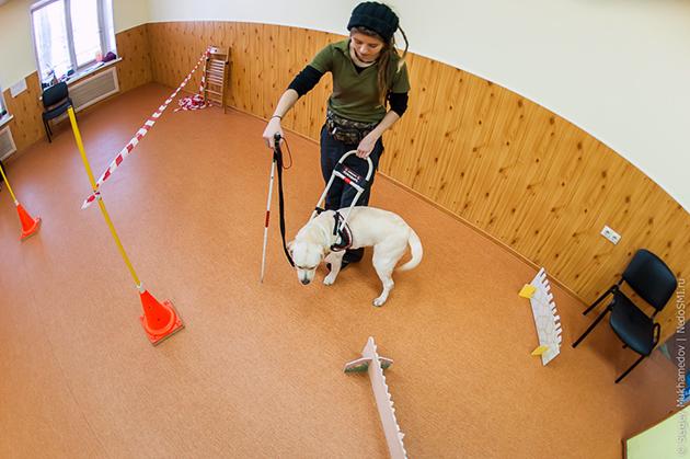 Профессионалы-кинологи обучают собаку полгода, а потом сдают экзамен перед комиссией
