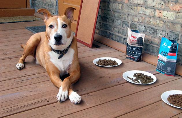 Суточную норму пищи для собаки рассчитывают исходя из веса питомца, а так же состояния его здоровья