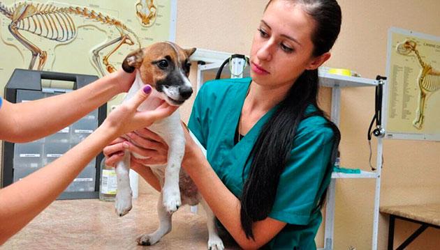Своевременная вакцинация и обследования, а так же правильное питание может уберечь собаку от энтерита
