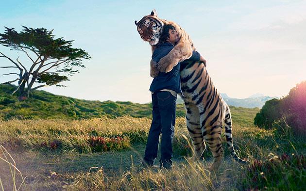 Тигры зачастую нападают на человека, когда тот заходит на их территорию или в случае опасности потомству