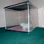 Выставочные палатки для кошек