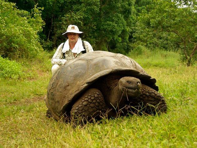 Многие виды черепах занесены в Красную Книгу