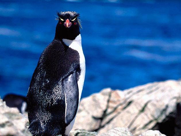 Наибольшее количество врагов пингвинов обитает в воде