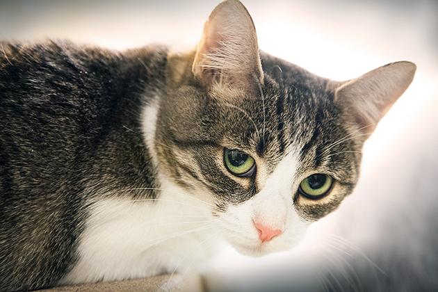 Корректировка кошачьего питания, дегельминтизация — лучшие методы профилактики