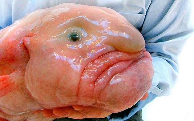 Рыбы-капли живут от 4 до 15 лет