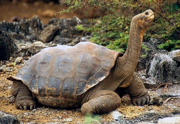 На сегодняшний день насчитывается более трехсот видов черепах
