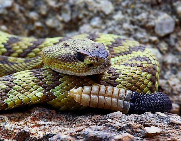 Многие виды змей включены в красную книгу