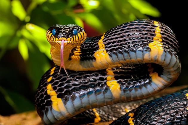 Змеи (лат. Sеrреntеs)